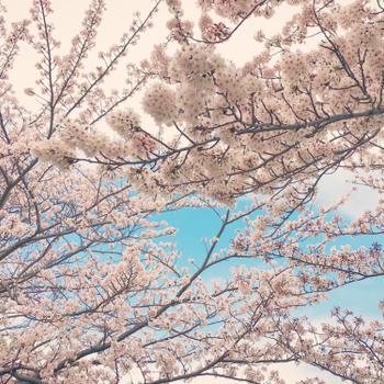 【 春・サクラとメッセージカード 】