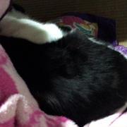 ミーさんの上手な寝かしつけ方法