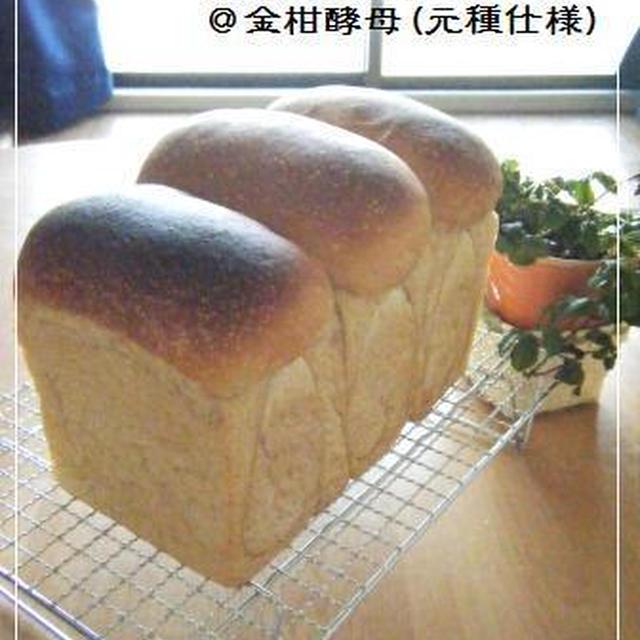黒糖ミルクジンジャー山食@金柑酵母