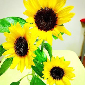 向日葵とおつまみ。