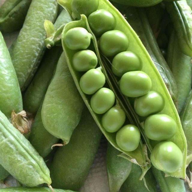 緑が鮮やかなグリンピースご飯