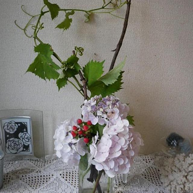 切り花から挿し木