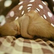 ポケットの中で。。。可愛い仔猫の姿