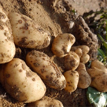 完全無農薬野菜を孫の為に…