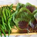家庭菜園の野菜の交換 青唐辛子味噌