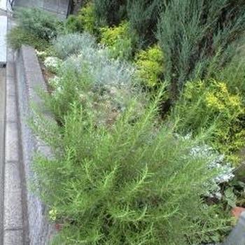 グリーンいっぱいの花壇