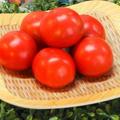 トマト大好きな妻も大喜びの松島とまと