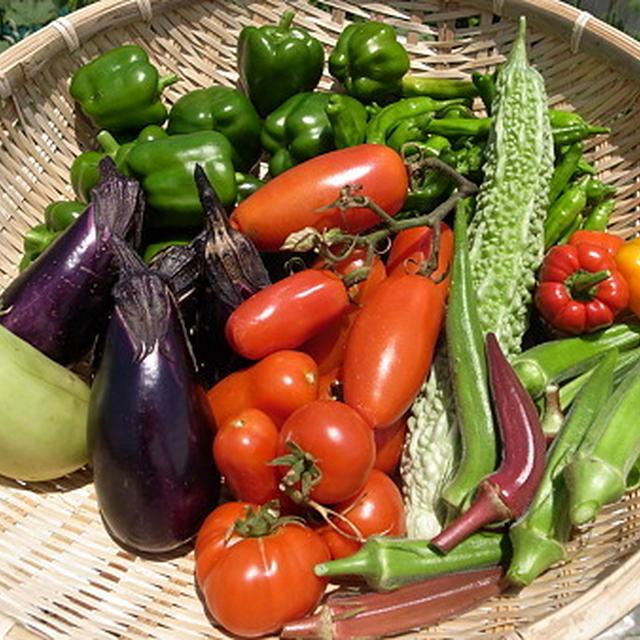 我が家の収穫野菜☆ヤングコーンの肉巻き巻き~♪