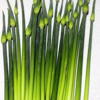 【野菜保存術】国産ニンニクの芽(茎) 使い方と下茹で・冷凍保存方法。