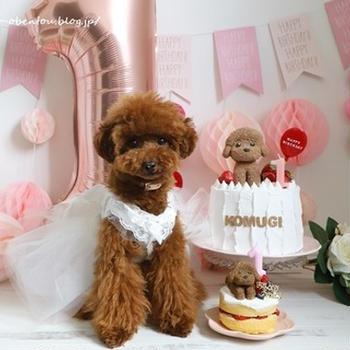 愛犬birthday*犬用ケーキと撮影用フェイクケーキ*レシピあり