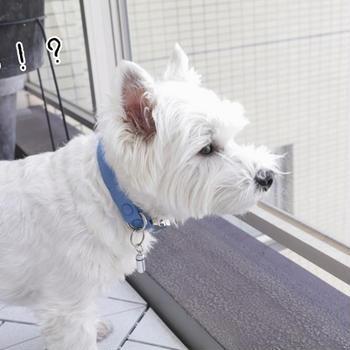 【犬】今日の犬。