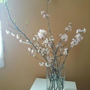 春ですねぇ 啓翁桜