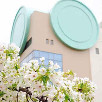 造幣局の桜の通り抜けとウルフギャング