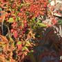 秋の庭より