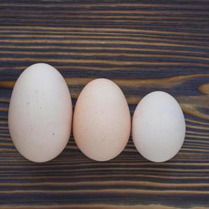 卵の大きさで目玉焼きの味が変わる?今さら聞けない「卵」の基本のき