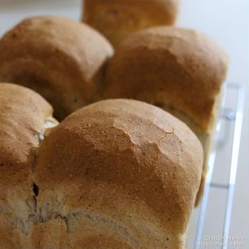 自家製酵母の「ライ麦食パン」軽い食感はやはりドライイーストが得意
