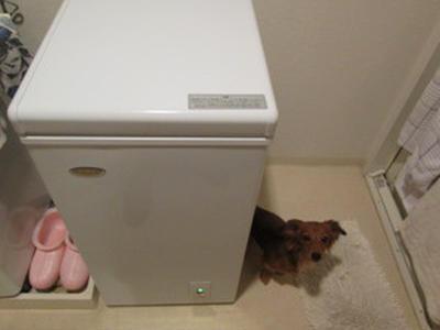 冷凍庫をゲット!!