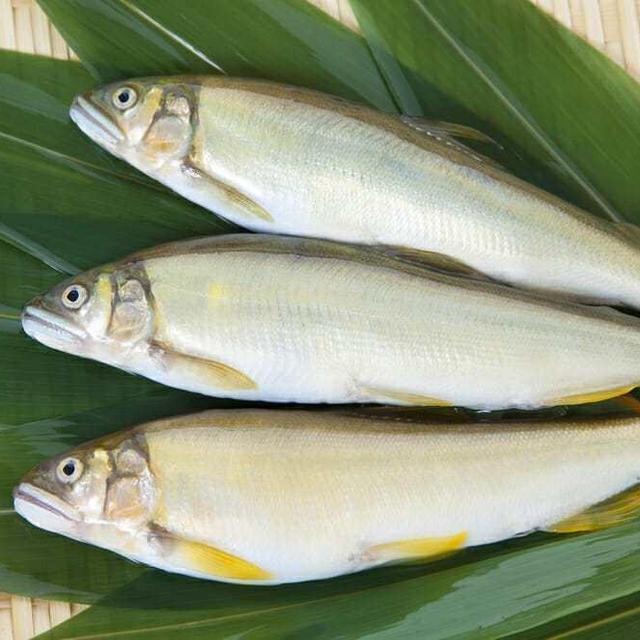 あゆ,アユ,鮎の値段 価格の相場と旬や栄養成分