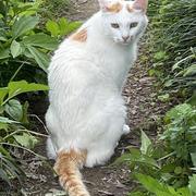 きょうのいちまい・絵に描いたようなみごとな美猫