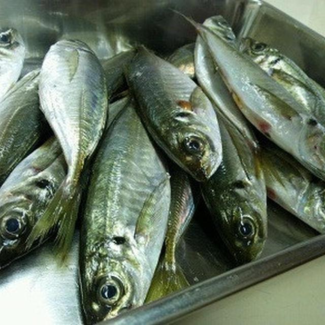 お魚親子料理教室