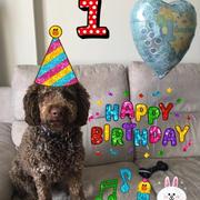 Buon 1° Compleanno di MOKO 🐶モコ1歳の誕生日🎂