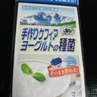 【手作りケフィアヨーグルトの種菌】