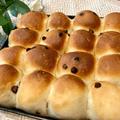 【お花見ピクニック】焼きたてチョコチップちぎりパン持ってお外でがぶり!