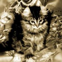 或る日の情景~猫10