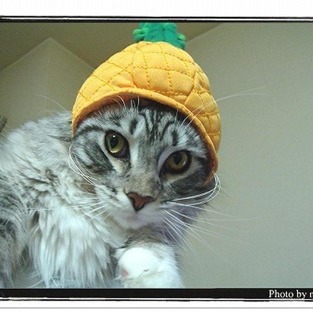 ●暮らしてみると不思議いっぱい猫との生活。