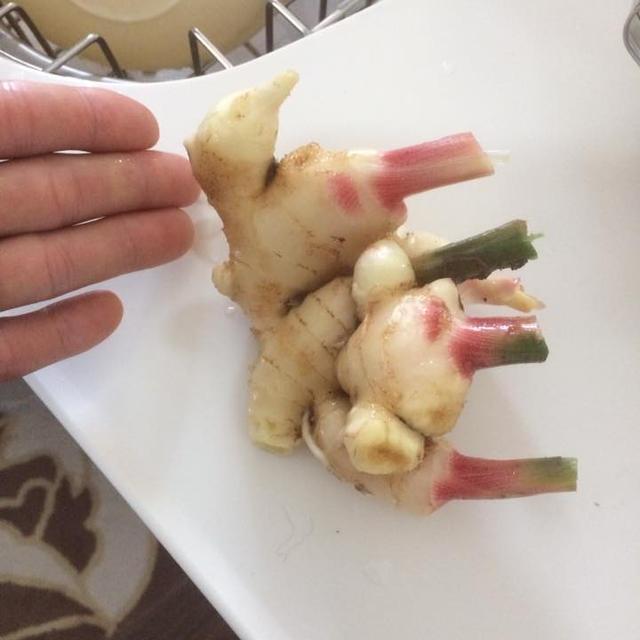 甘酢漬け針生姜