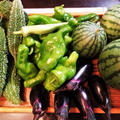 ■昨日の菜園収穫品【先ずは簡単5分!! 茄子の浅漬けから作りました^^】