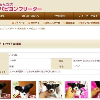 日本での新しい家族!