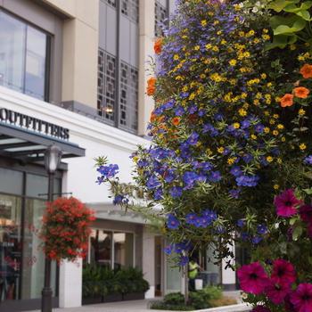 シアトル旅行1 花いっぱいの街