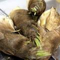 ◆筍が届きましたぁ♪~ゆるやか糖質制限中♪