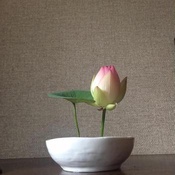 fleur de lotus 蓮の花