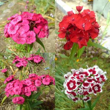 鉢植えのお花たち