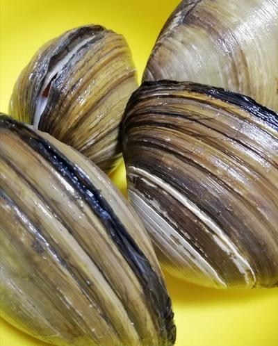 年末パーティーに欠かせないピラフ!ホッキ貝を使った洋風混ぜご飯!腕の見せ所です!
