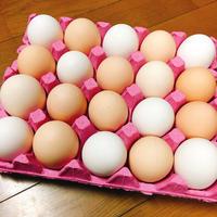 たくさんの卵の中身は…