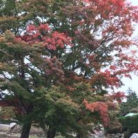 有馬瑞宝寺公園の紅葉とプリンちゃん。