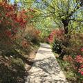 花見山~水林~盛岡