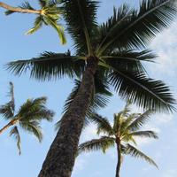 ハワイ旅行 2014