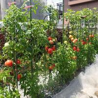 シャウレンチンde夏トマトカップスープ
