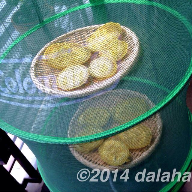 干し芋の作り方 保存して甘いものが欲しくなったらいつでも食べることができる干し芋