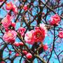 春、新しいことを始める季節ですね