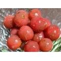 ≪プチトマトの パクチードレッシング漬け≫