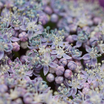 花を撮るわくわくが広がるマクロレンズの世界!Canon一眼レフカメラAPS-C機におすすめのマクロレンズ