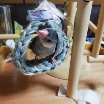 ブンちゃん用 鍵編み皿巣