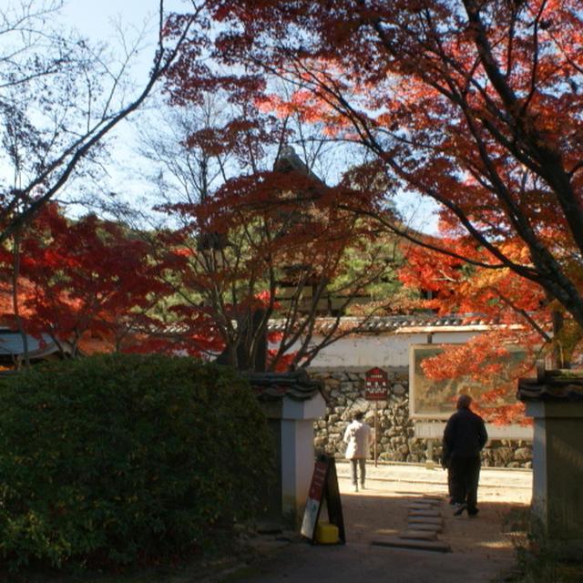 今年の紅葉は奈良&養老 その1