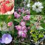 日本橋髙島屋梱包完了!お庭ではニゲラが咲いてます