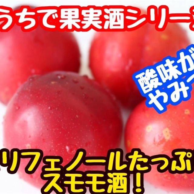 【レシピ】おうちで果実酒!ポリフェノールたっぷりスモモ酒!